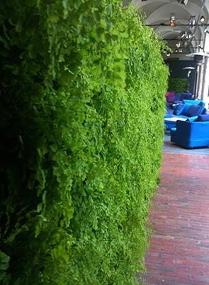 vertical fern garden, by Verde profilo